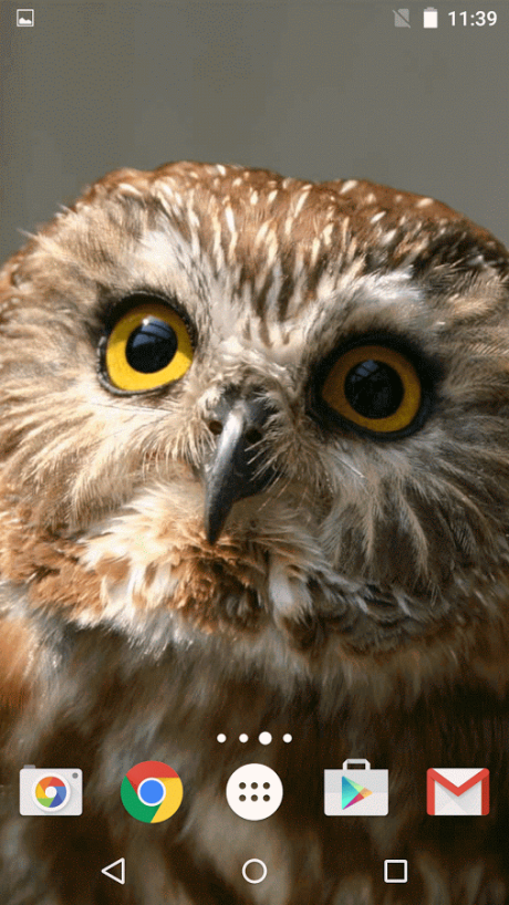Download Wallpaper Owl Lucu Wallpaper Owl Me Tap And Get The Free